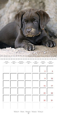 Chocolate Labs (Wall Calendar 2019 300 × 300 mm Square) - Produktdetailbild 3