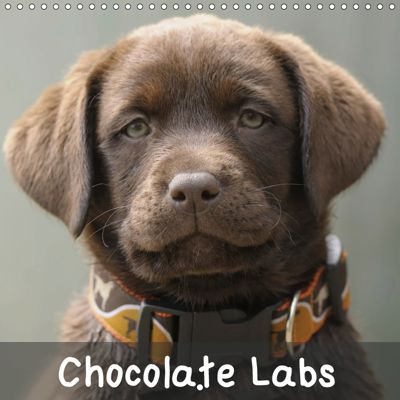 Chocolate Labs (Wall Calendar 2019 300 × 300 mm Square), Peter Faber