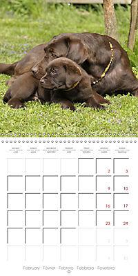 Chocolate Labs (Wall Calendar 2019 300 × 300 mm Square) - Produktdetailbild 2