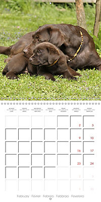 Chocolate Labs (Wall Calendar 2019 300 × 300 mm Square) - Produktdetailbild 2