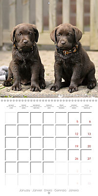 Chocolate Labs (Wall Calendar 2019 300 × 300 mm Square) - Produktdetailbild 1