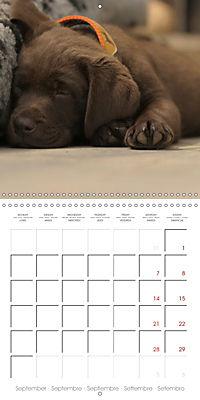 Chocolate Labs (Wall Calendar 2019 300 × 300 mm Square) - Produktdetailbild 9