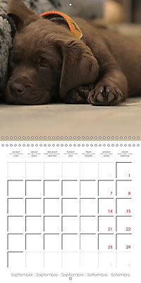 Chocolate Labs (Wall Calendar 2019 300 × 300 mm Square) - Produktdetailbild 9