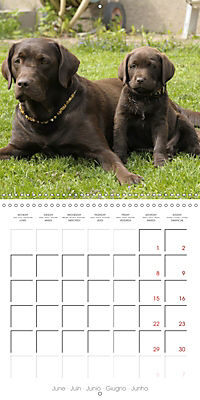 Chocolate Labs (Wall Calendar 2019 300 × 300 mm Square) - Produktdetailbild 6