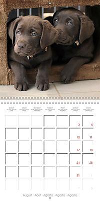 Chocolate Labs (Wall Calendar 2019 300 × 300 mm Square) - Produktdetailbild 8
