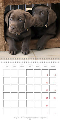 Chocolate Labs (Wall Calendar 2019 300 × 300 mm Square) - Produktdetailbild 8