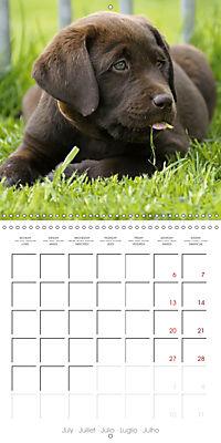 Chocolate Labs (Wall Calendar 2019 300 × 300 mm Square) - Produktdetailbild 7