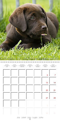 Chocolate Labs (Wall Calendar 2019 300 × 300 mm Square) - Produktdetailbild 7