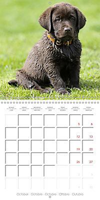 Chocolate Labs (Wall Calendar 2019 300 × 300 mm Square) - Produktdetailbild 10