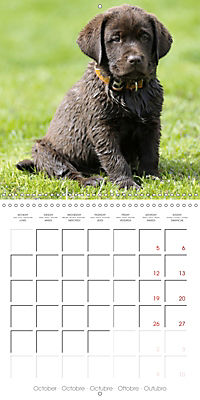 Chocolate Labs (Wall Calendar 2019 300 × 300 mm Square) - Produktdetailbild 10