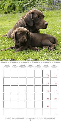 Chocolate Labs (Wall Calendar 2019 300 × 300 mm Square) - Produktdetailbild 11