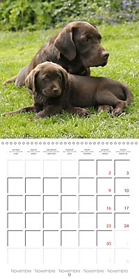 Chocolate Labs (Wall Calendar 2019 300 × 300 mm Square) - Produktdetailbild 11