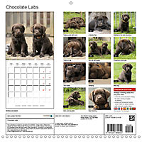 Chocolate Labs (Wall Calendar 2019 300 × 300 mm Square) - Produktdetailbild 13