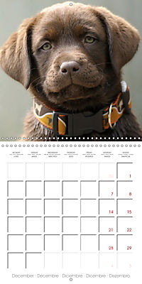 Chocolate Labs (Wall Calendar 2019 300 × 300 mm Square) - Produktdetailbild 12