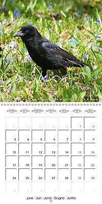 Clever Raven (Wall Calendar 2019 300 × 300 mm Square) - Produktdetailbild 6