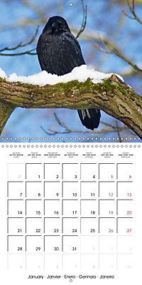 Clever Raven (Wall Calendar 2019 300 × 300 mm Square) - Produktdetailbild 1