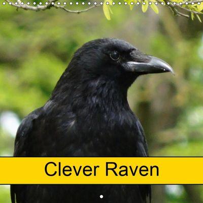Clever Raven (Wall Calendar 2019 300 × 300 mm Square), kattobello