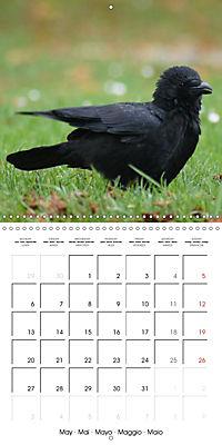 Clever Raven (Wall Calendar 2019 300 × 300 mm Square) - Produktdetailbild 5