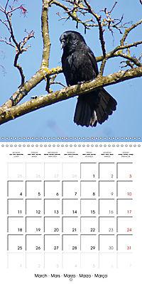 Clever Raven (Wall Calendar 2019 300 × 300 mm Square) - Produktdetailbild 3
