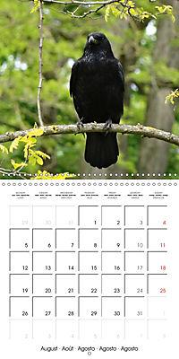Clever Raven (Wall Calendar 2019 300 × 300 mm Square) - Produktdetailbild 8