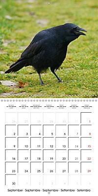 Clever Raven (Wall Calendar 2019 300 × 300 mm Square) - Produktdetailbild 9