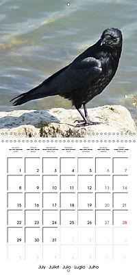 Clever Raven (Wall Calendar 2019 300 × 300 mm Square) - Produktdetailbild 7