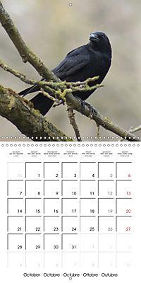Clever Raven (Wall Calendar 2019 300 × 300 mm Square) - Produktdetailbild 10