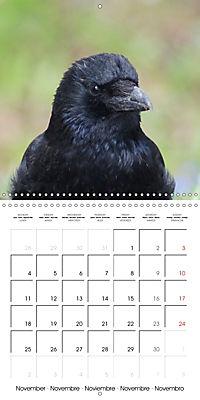 Clever Raven (Wall Calendar 2019 300 × 300 mm Square) - Produktdetailbild 11