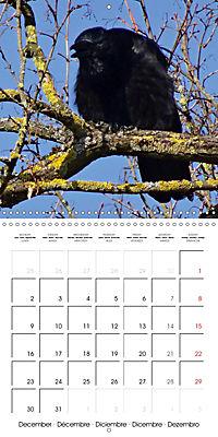 Clever Raven (Wall Calendar 2019 300 × 300 mm Square) - Produktdetailbild 12