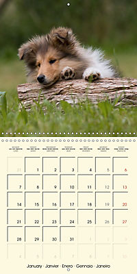 Collie Puppies to fall in love with (Wall Calendar 2019 300 × 300 mm Square) - Produktdetailbild 1