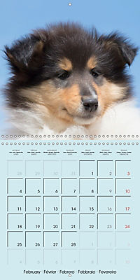 Collie Puppies to fall in love with (Wall Calendar 2019 300 × 300 mm Square) - Produktdetailbild 2