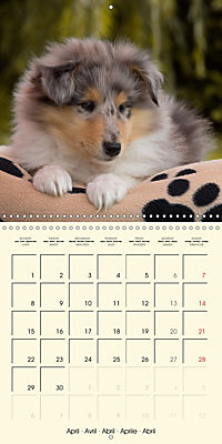 Collie Puppies to fall in love with (Wall Calendar 2019 300 × 300 mm Square) - Produktdetailbild 4