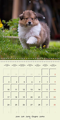 Collie Puppies to fall in love with (Wall Calendar 2019 300 × 300 mm Square) - Produktdetailbild 6