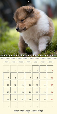 Collie Puppies to fall in love with (Wall Calendar 2019 300 × 300 mm Square) - Produktdetailbild 3