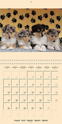 Collie Puppies to fall in love with (Wall Calendar 2019 300 × 300 mm Square) - Produktdetailbild 8