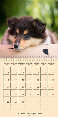 Collie Puppies to fall in love with (Wall Calendar 2019 300 × 300 mm Square) - Produktdetailbild 7