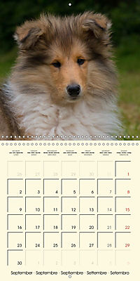 Collie Puppies to fall in love with (Wall Calendar 2019 300 × 300 mm Square) - Produktdetailbild 9
