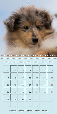 Collie Puppies to fall in love with (Wall Calendar 2019 300 × 300 mm Square) - Produktdetailbild 10
