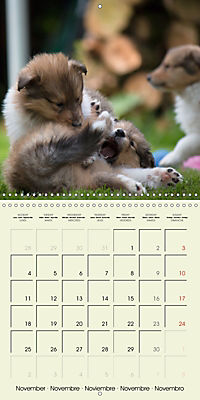 Collie Puppies to fall in love with (Wall Calendar 2019 300 × 300 mm Square) - Produktdetailbild 11