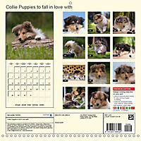 Collie Puppies to fall in love with (Wall Calendar 2019 300 × 300 mm Square) - Produktdetailbild 13