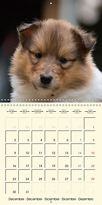 Collie Puppies to fall in love with (Wall Calendar 2019 300 × 300 mm Square) - Produktdetailbild 12