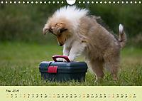 Collie Welpen zum Verlieben (Wandkalender 2019 DIN A4 quer) - Produktdetailbild 5