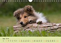 Collie Welpen zum Verlieben (Wandkalender 2019 DIN A4 quer) - Produktdetailbild 3