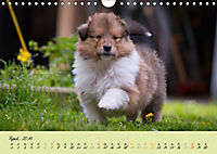 Collie Welpen zum Verlieben (Wandkalender 2019 DIN A4 quer) - Produktdetailbild 4