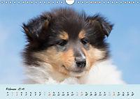 Collie Welpen zum Verlieben (Wandkalender 2019 DIN A4 quer) - Produktdetailbild 2