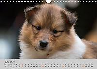 Collie Welpen zum Verlieben (Wandkalender 2019 DIN A4 quer) - Produktdetailbild 7