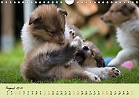 Collie Welpen zum Verlieben (Wandkalender 2019 DIN A4 quer) - Produktdetailbild 8