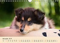 Collie Welpen zum Verlieben (Wandkalender 2019 DIN A4 quer) - Produktdetailbild 11