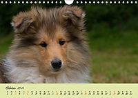 Collie Welpen zum Verlieben (Wandkalender 2019 DIN A4 quer) - Produktdetailbild 10