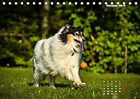 Collies? Was sonst! (Tischkalender 2019 DIN A5 quer) - Produktdetailbild 10